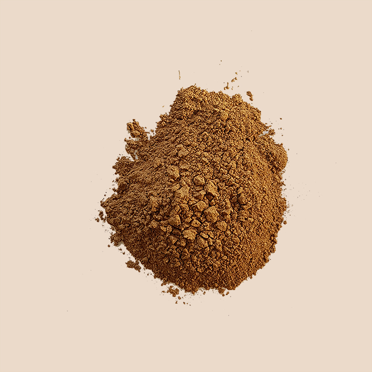 buy purwoceng root powder